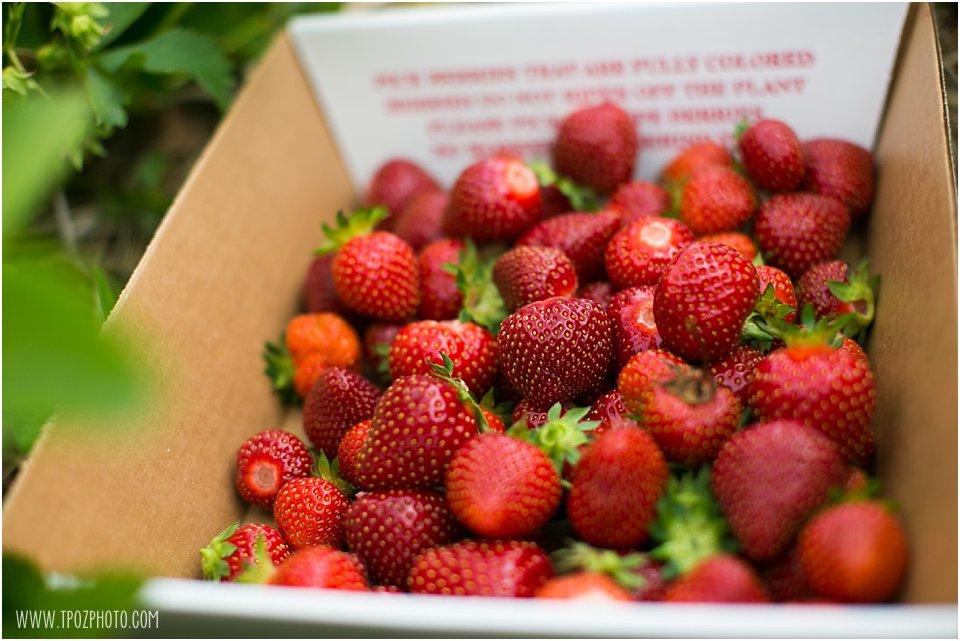 Strawberry-Picking_0003.jpg