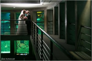 National Aquarium wedding photos by the shark tanks