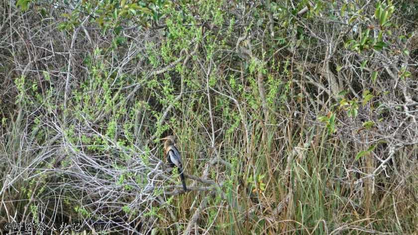 大沼澤地國家公園 24