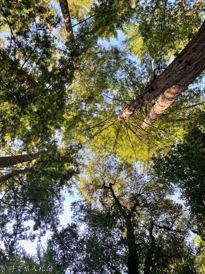 Portola redwood state park 7