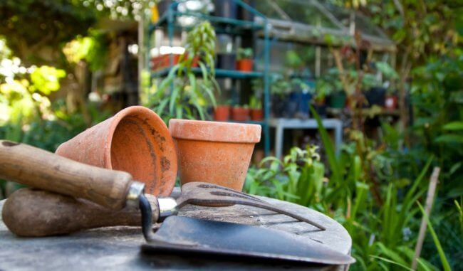 Gardening In Texas 11 Tips And Facts For The Beginner Travisso Blog