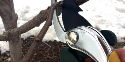 How to prune a tree