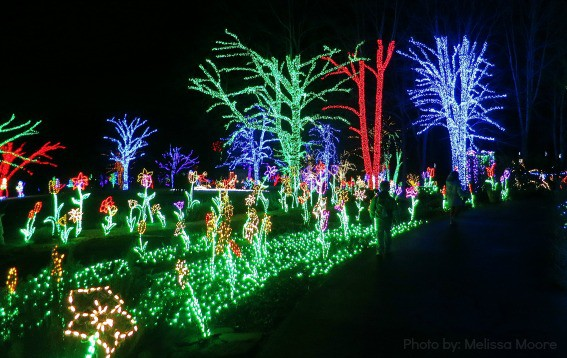 Gardens Lights Brookside