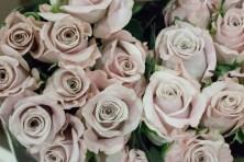 Rose Menta