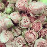 Spray Rose Bomabastic