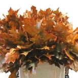 oak-leaves-dyed-orange-wholesale