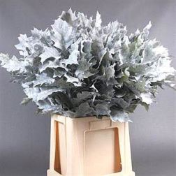 oak-leaves-dyed-white-wholesale
