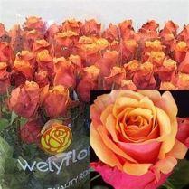 Rose Cherry Brandy