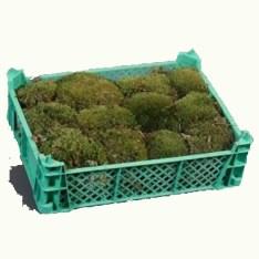 fresh-cushion-moss-wholesale-2