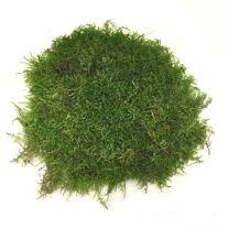 peat-moss-english-wholesale