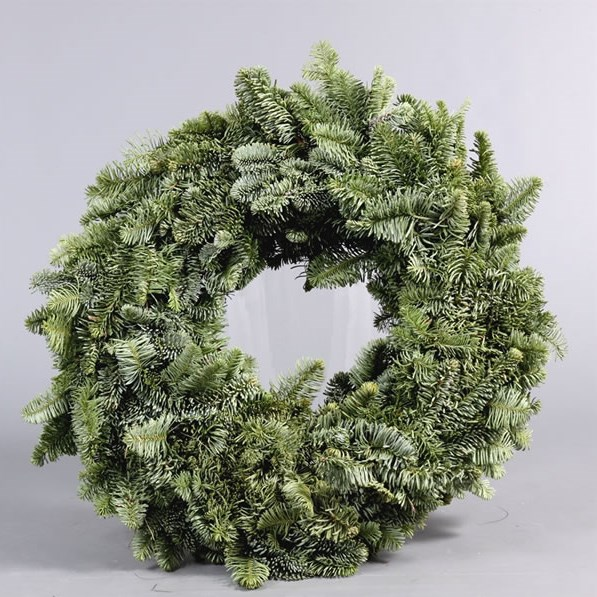 Blue Spruce Rings