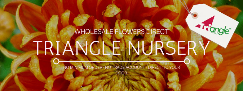 triangle-nursery-ltd