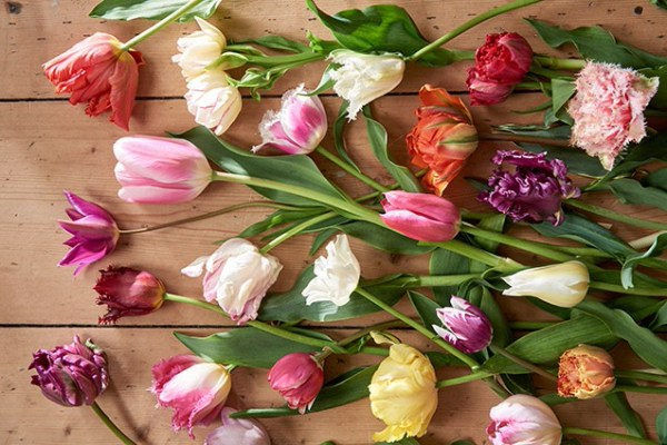 Kick start your year with Tulips