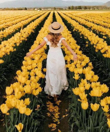 Yellow Spring Flowers - Wholesale Flowers Direct UK