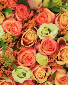 Autumnal Top Picks