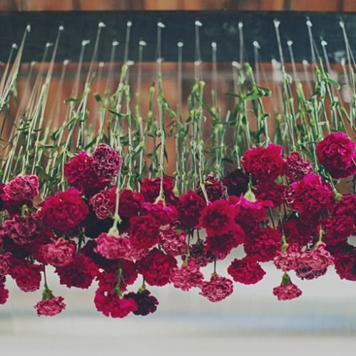 Cut Costs with Carnations