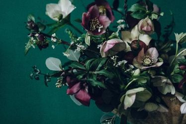 Product Profile Hellebores