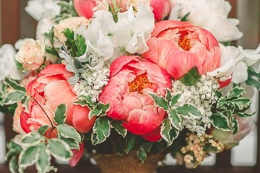 Living Coral Flower Suggestions for Weddings & Events 2019