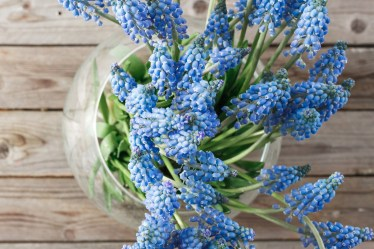 How to Make a Spring Woodland Arrangement with Muscari - Triangle Nursery