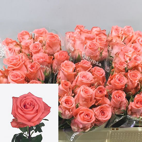 February Blooms to Market 2019!