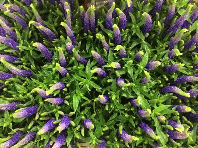 Buy Wholesale Flowers Online Direct to you Door UK