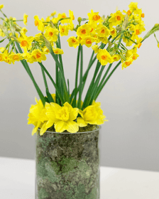 Flower Guides and DIY How to tutorials with Triangle Nursery, flower wholesalers