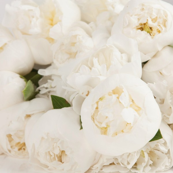 May New Blooms to Market 2019