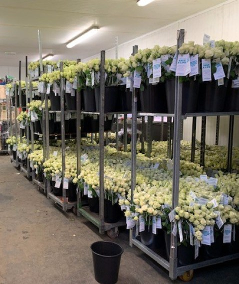 Triangle Nursery Ltd - Wholesale Flowers Direct UK