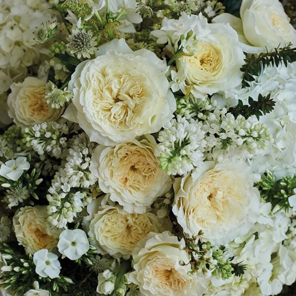 Flower of the Month June: Garden Roses