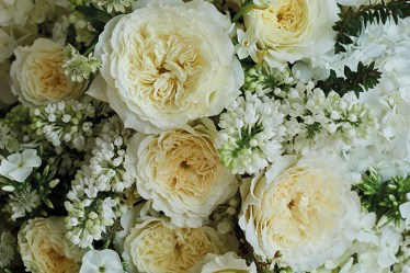 Celebrate Garden Roses this June with Triangle Nursery