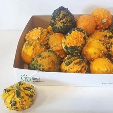 Gourds-Wratten-Mix.jpg