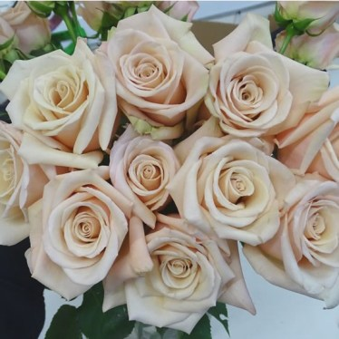 Rose-Bridal-Nude-60cm.jpg