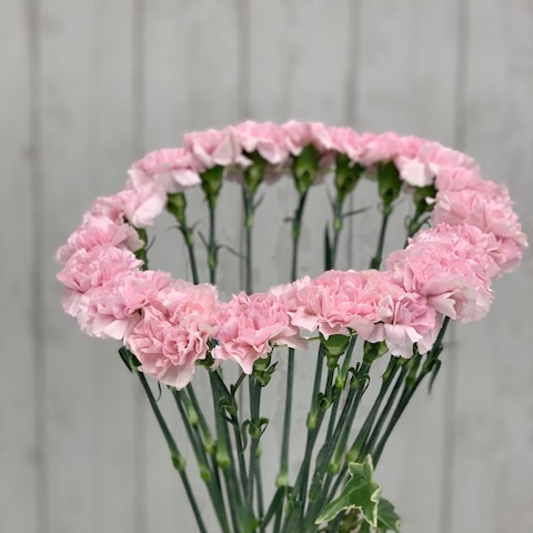 DIY Wired Carnation Design