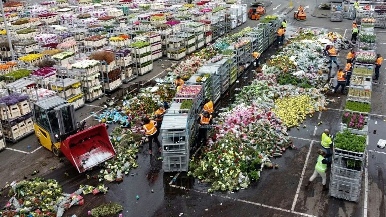 flowers-thrown-away-FloraHolland-lifestyle-AFP-220320-2