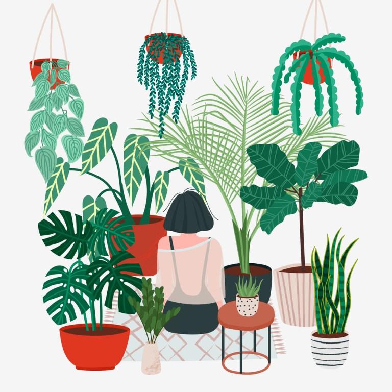 Health Benefits of House Plants