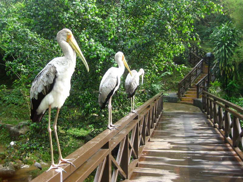 Kuala Lumpur Bird Park have a stunning display of exotic birds from all over the world.