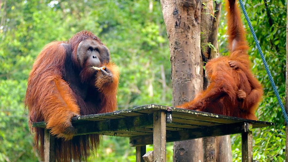 Family vacation in Kuching, Borneo, Malaysia