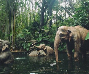 Washing an elephant should be a part of your list of Malaysia things to do