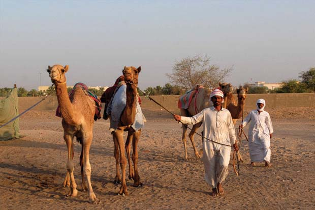 Places and Things to do in Dubai: Camel Market Al Lisaili Dubai