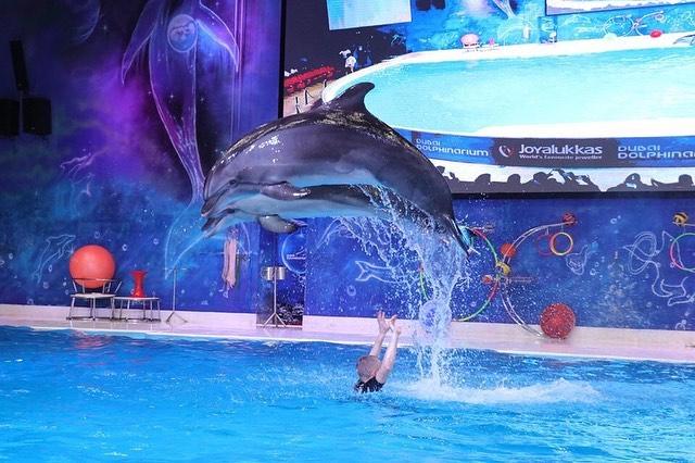 Dolphin Performance Dubai