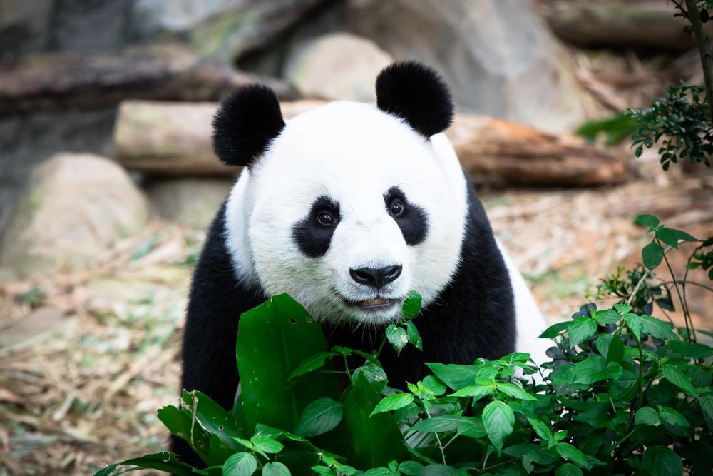 Lihat Haiwan di Zoo Melalui Lawatan Maya Online