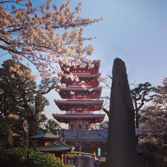 Best Time To Visit Japan, Spring