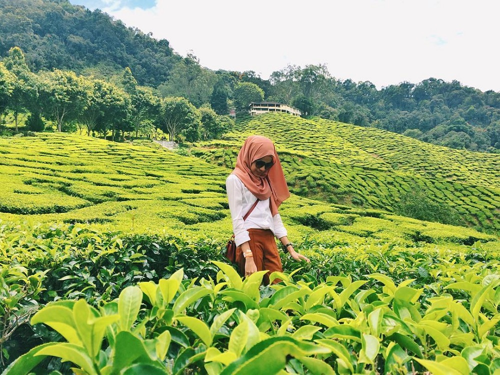 Cameron Highlands is definitely a crowds' favourite for holiday