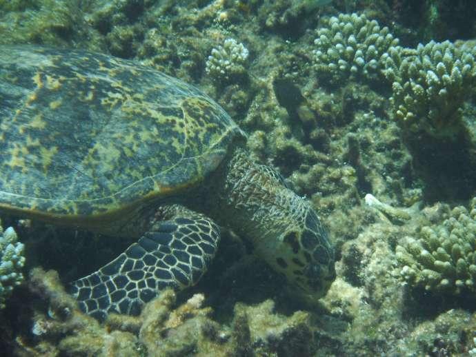 遇到海龜很可愛