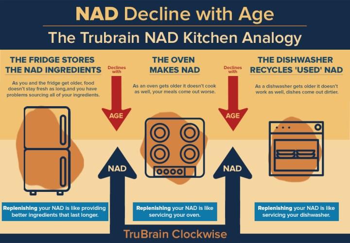 How Trubrain Clockwise Boosts NAD