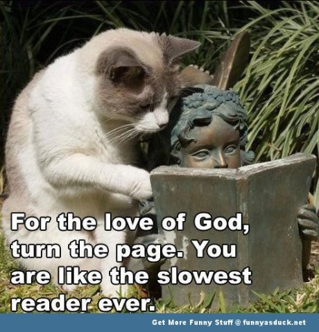 Funny-Cat-Reading-Meme