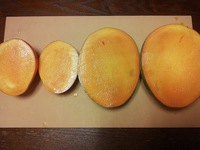 マンゴーの食べくらべ(アーウィンとキーツ)
