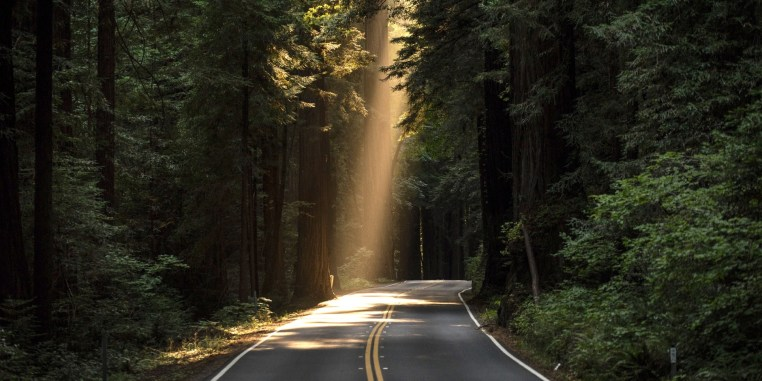 Image result for pics of redwood trees on hwy 1
