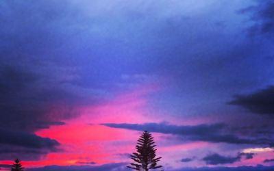 Lanai Sunset and Pine