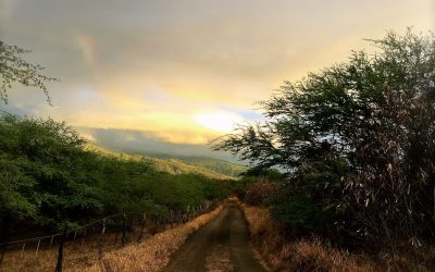 Maui Morning Walks ……